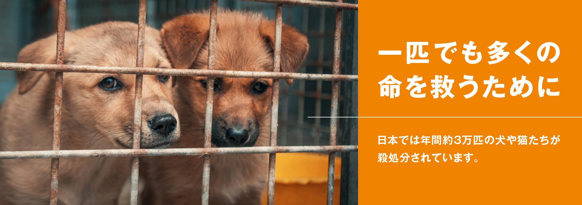 【動物愛護】一匹でも多くの命を救うために