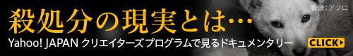 殺処分の現実とは… Yahoo! JAPANクリエイターズプログラムで見るドキュメンタリーの世界