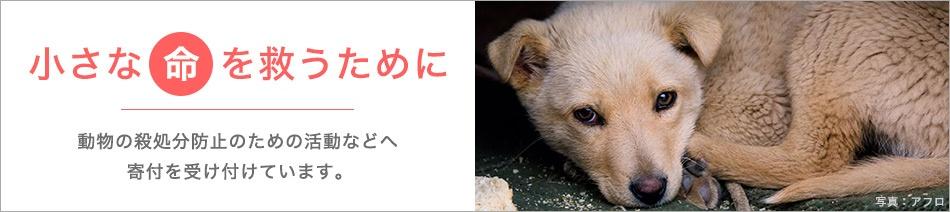小さな命を救うために 動物の殺処分防止のための活動などへ寄付を受け付けています。