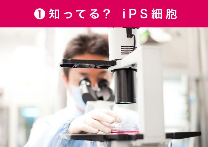 知ってる? iPS細胞