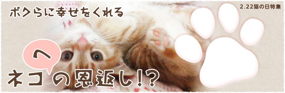 2.22猫の日特集 ボクらに幸せをくれるネコへの恩返し!?