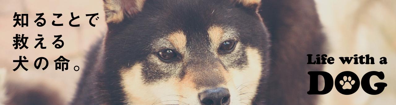 知ることで救える犬の命。