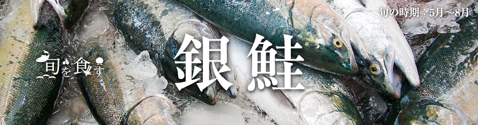 旬を食す 銀鮭 旬の時期:5月~8月
