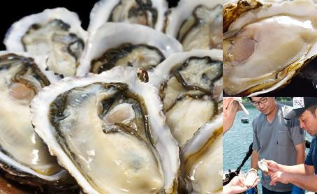 新昌ブランドの殻付牡蠣・ハーフシェル(10枚)の写真