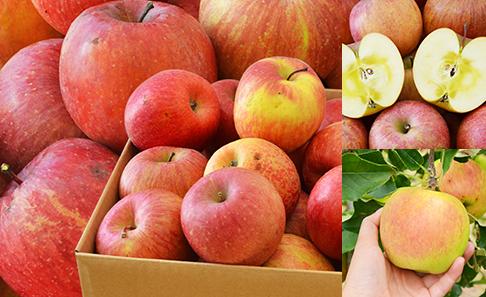宮城・山形県産 訳ありリンゴ約5kg(16~28玉)の写真