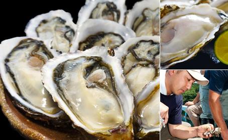 新昌ブランド 殻付牡蠣・ハーフシェルの写真