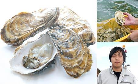 生食用殻付き黄金牡蠣