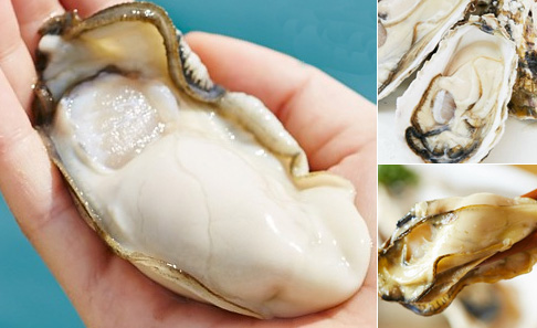 ハーフシェル牡蠣の写真