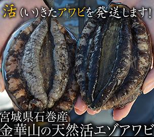 宮城県石巻産 金華山の天然活エゾアワビ