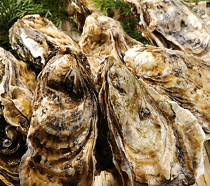 岬焼おかわりセット、殻付きカキ