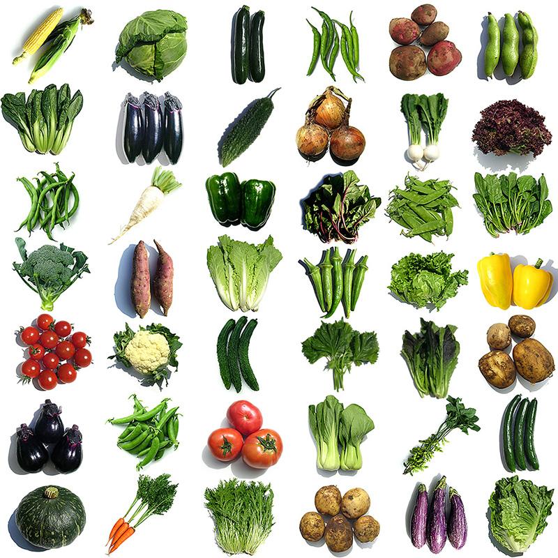 野菜9品目詰め合せの写真