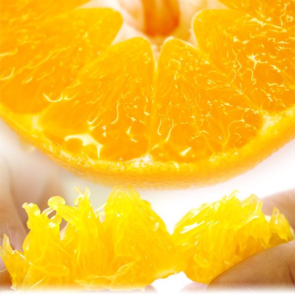 希少な柑橘、甘平の写真