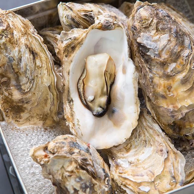 女川黄金牡蠣の写真