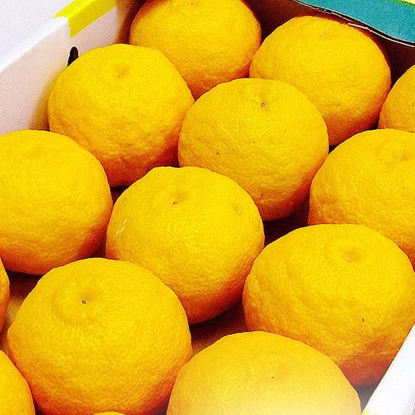 ご家庭用の柚子の写真