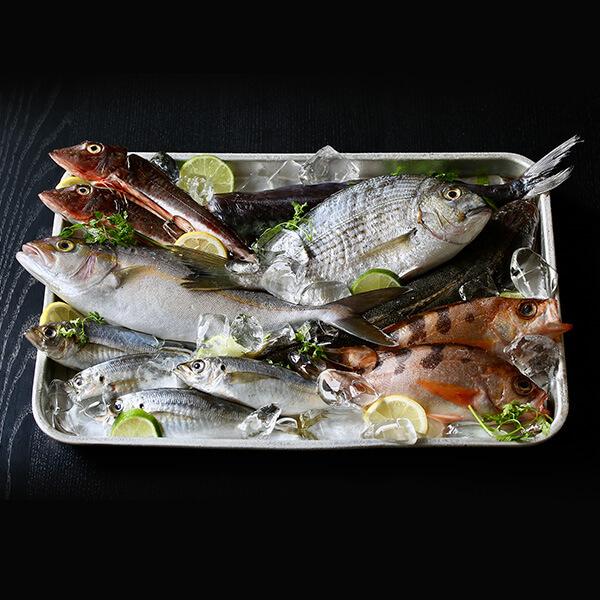 相模湾の鮮魚詰合せの写真