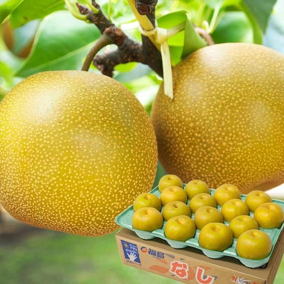産地直送 JAふくしま未来の梨 5キロ