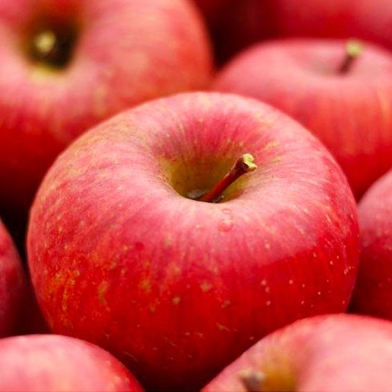 しのぶの里のおいしいリンゴ 家庭用訳あり