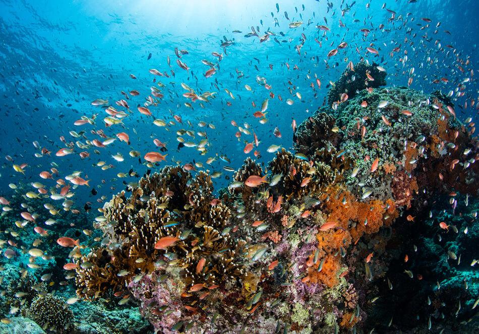 生物多様性の保護
