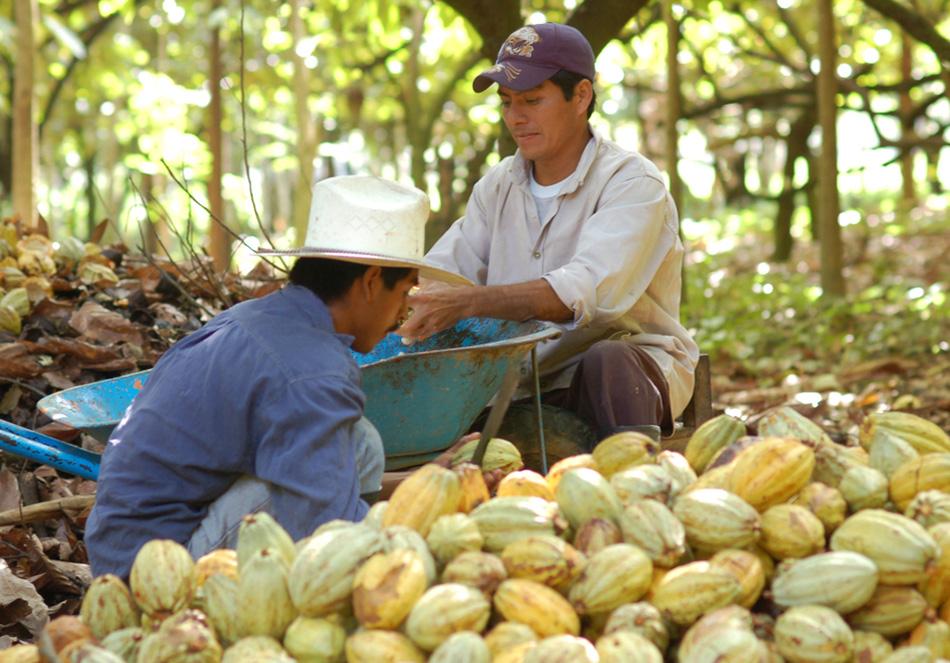 ブロックチェーン活用でカカオ農家を直接支援できるチョコレート(外部サイト)