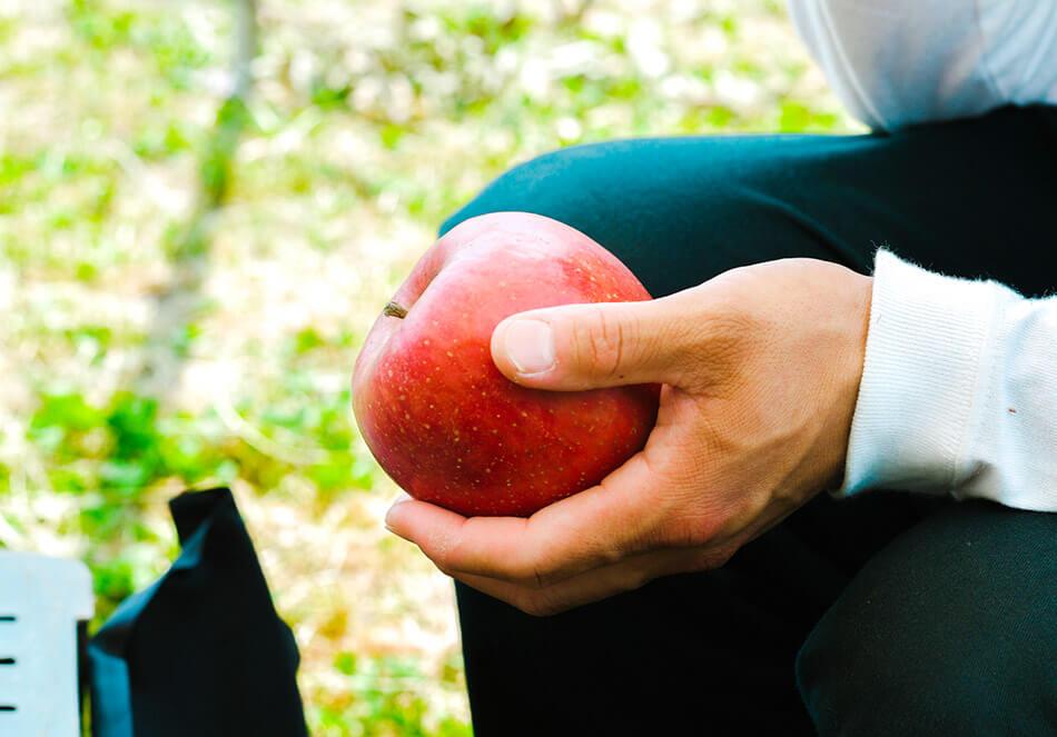 高祖父の時代から続く果樹園を引き継いだ、五代目・宮下直也さん