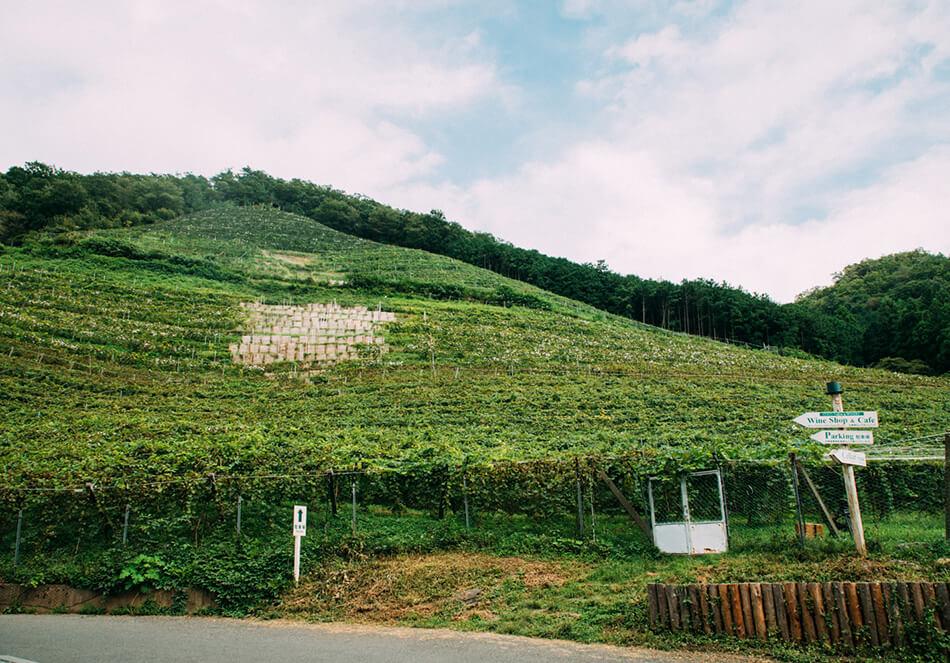 ココ・ファーム・ワイナリーのぶどう畑