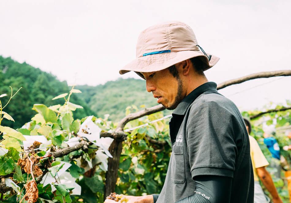 ココ・ファーム・ワイナリーで15年間ぶどうづくりに取り組んできた栽培長の石井秀樹さん