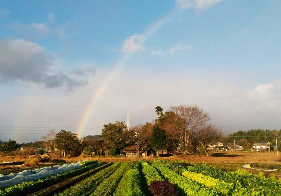 有機栽培の米 天日干し