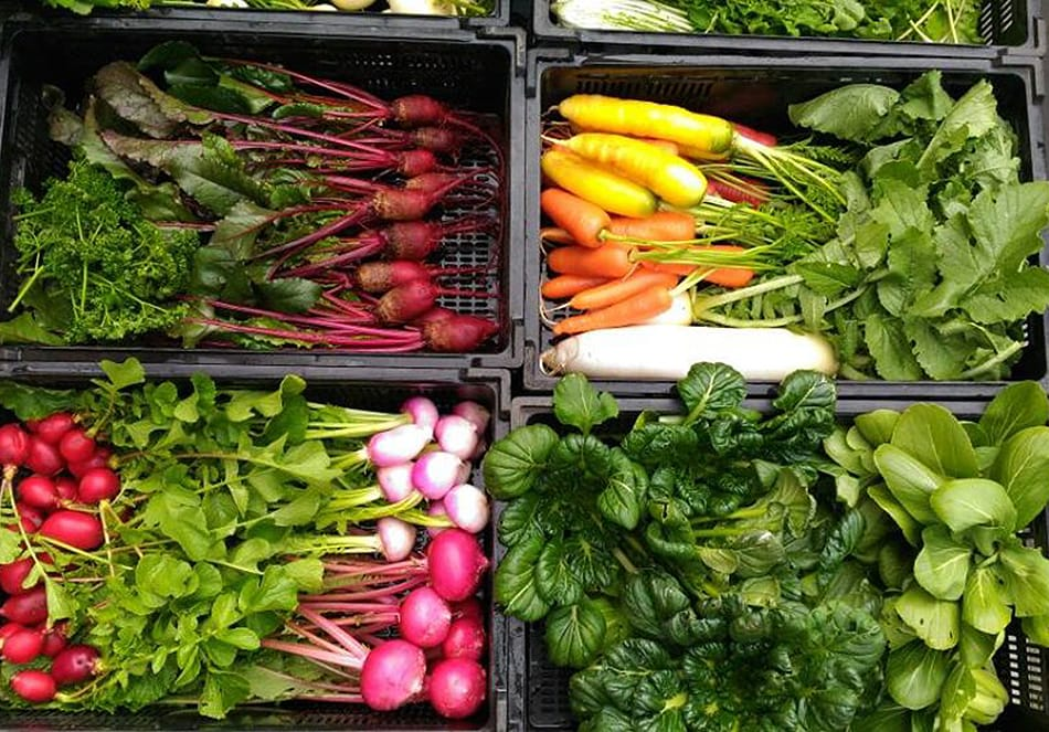 人も自然の中にいる。<br>オーガニックの野菜を食べようの写真
