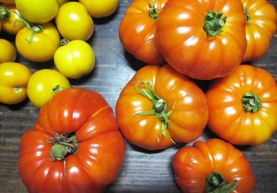 有機野菜 トマト