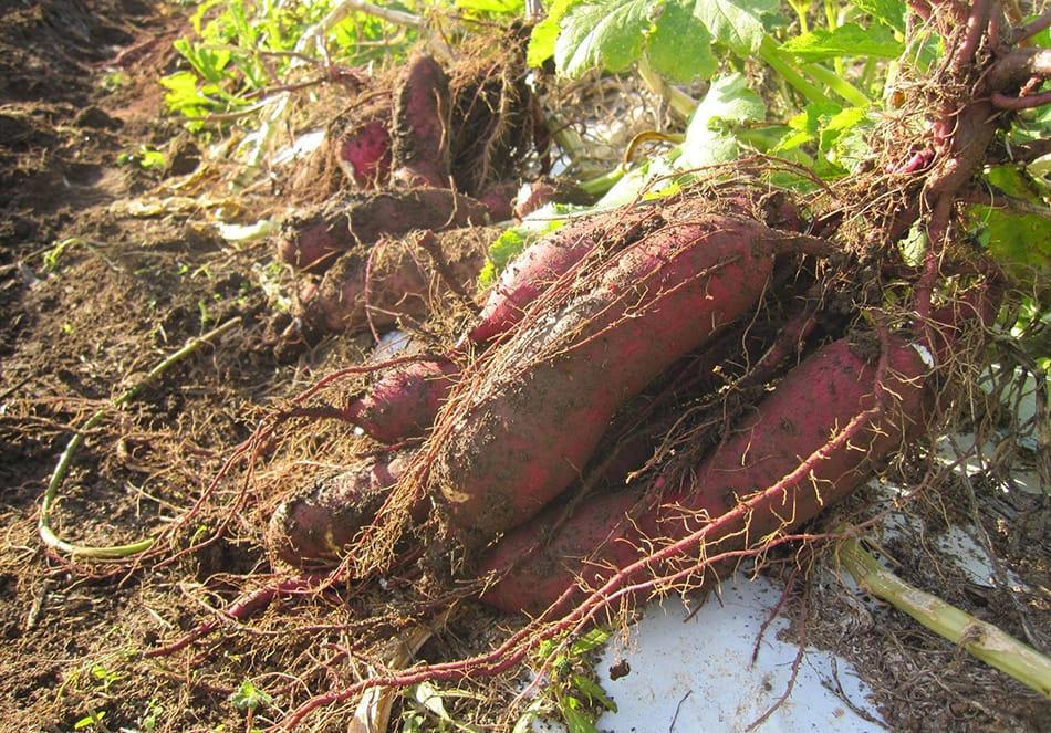 「森の土」をめざして。発酵の循環型の土づくり