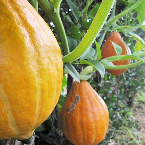 家庭菜園にも使える!<br>有機農家さんに聞いた野菜を育てる3つのコツ