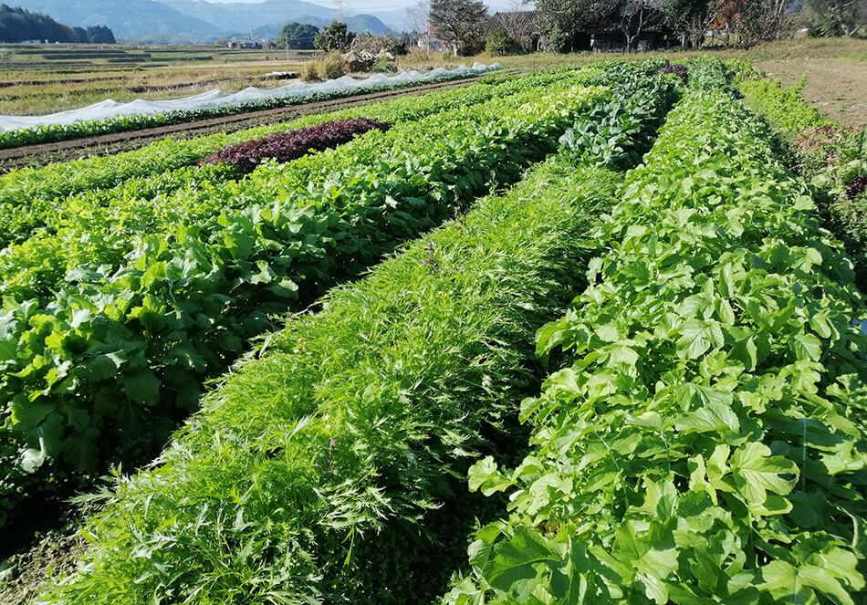 バイオダイナミック農法の4つの特徴