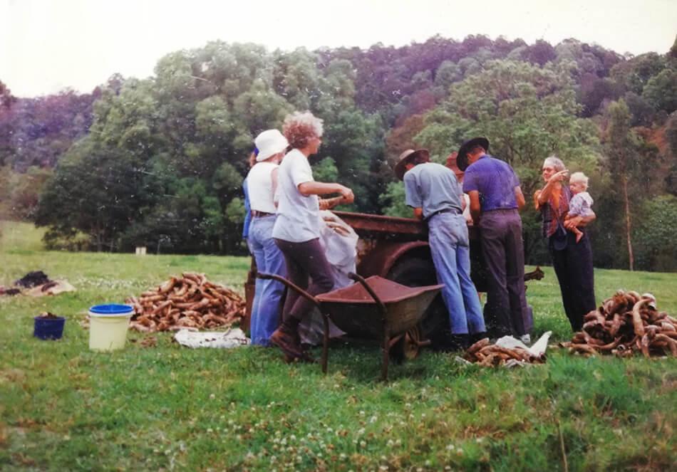 この日は、約2,000本の牛の角を掘り出しました