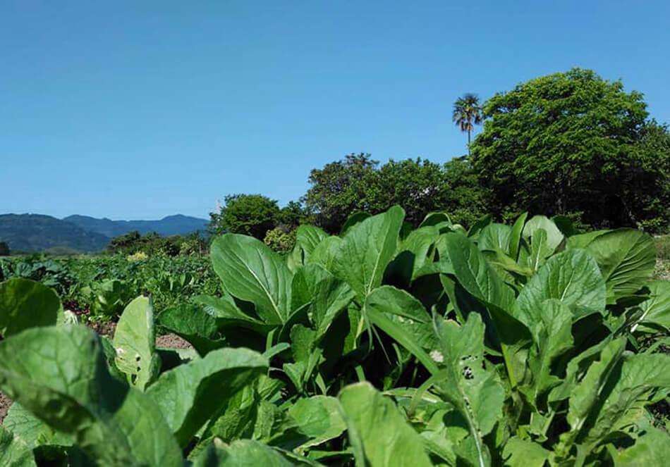 今こそ目を向けたい 未来をつなぐバイオダイナミック農法