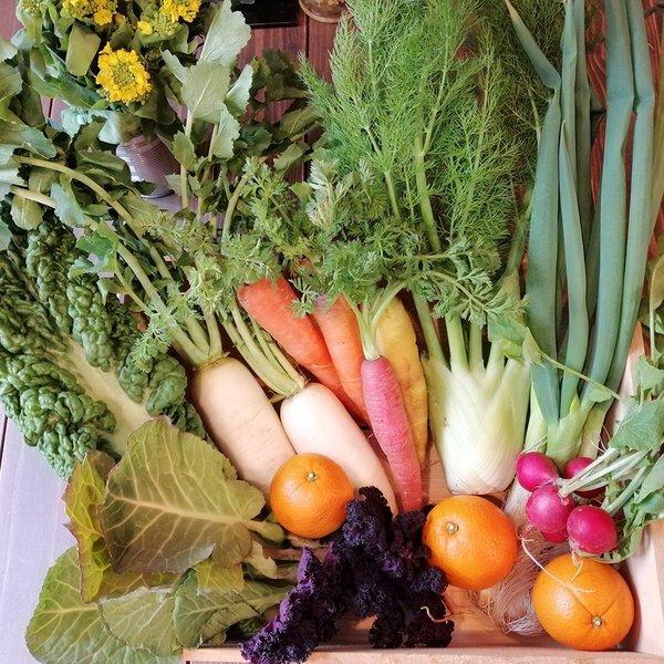 農園てとてさんの有機野菜セット