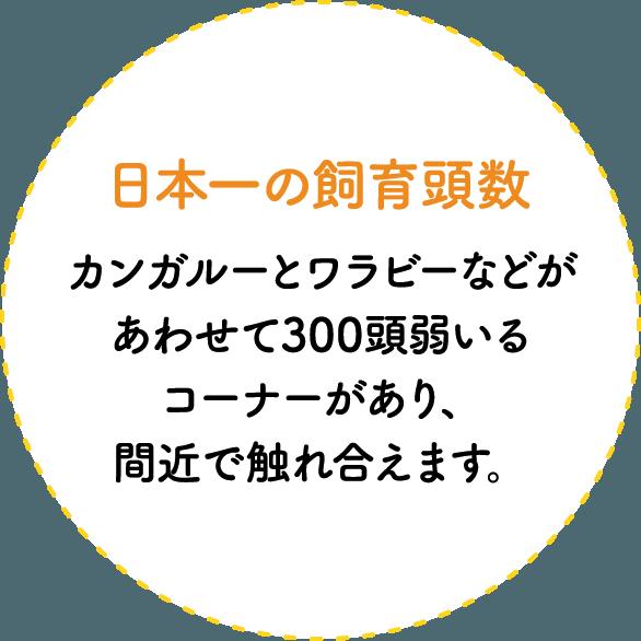 日本一の飼育頭数 カンガルーやワラビーなどがあわせて300頭弱いるコーナーがあり、間近で触れ合えます。