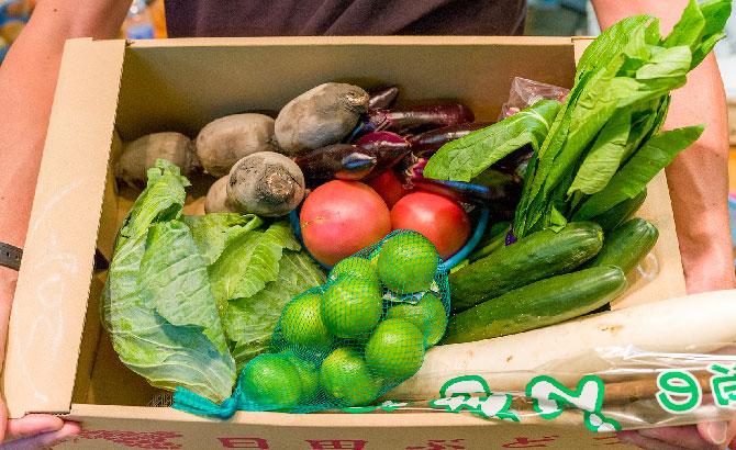 【とれたて!九州野菜セット】の写真