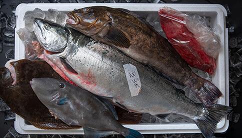 大森式鮮魚Box3㎏