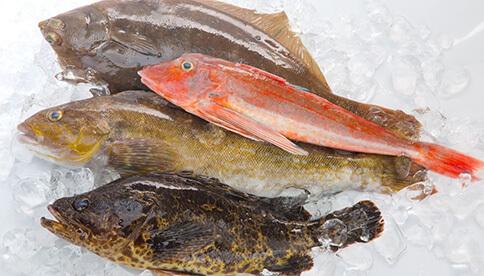 津田鮮魚Box2㎏