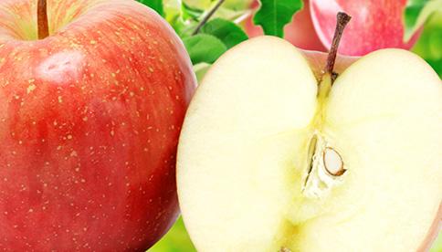 品種おまかせ、訳ありリンゴ