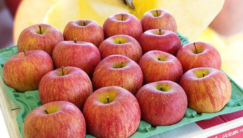 特別栽培りんご(品種が選べます)