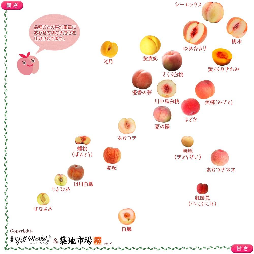 桃の品種 固さと甘さの分布図