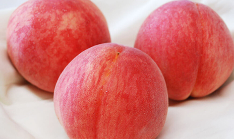 御所の「ピンク桃」