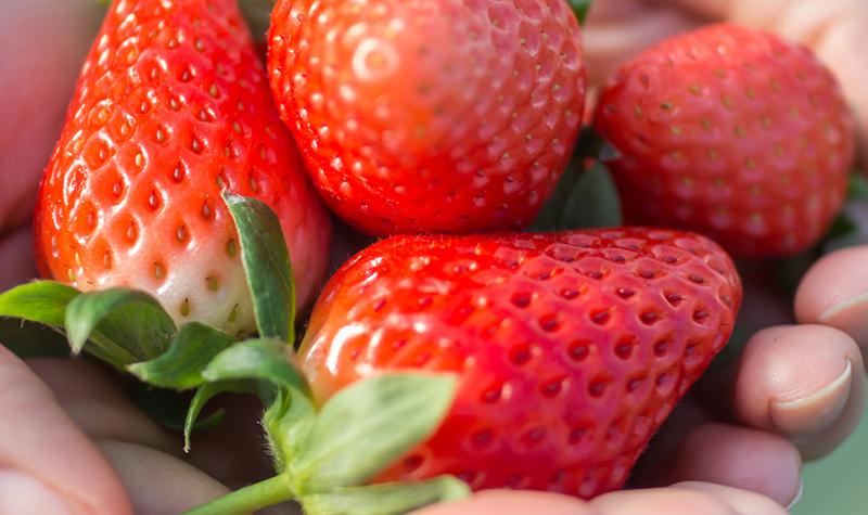 宮城県産4品種の食べ比べ