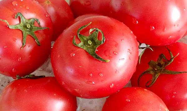 フルーツトマト「北の極」