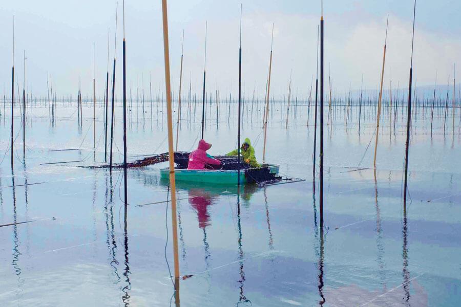 有明海の海苔の養殖