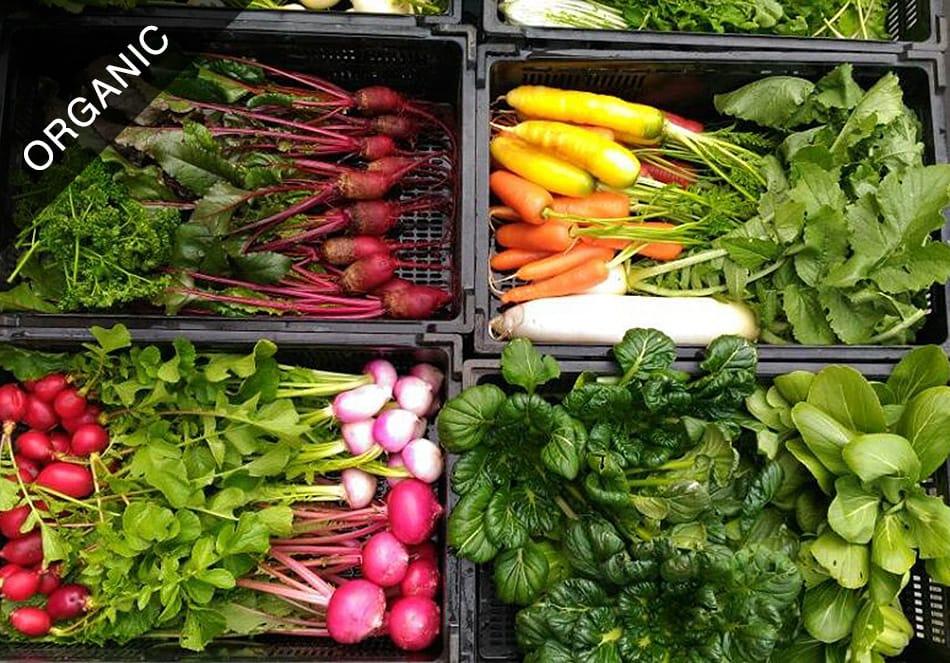 人も自然の中にいる オーガニックの野菜を食べよう