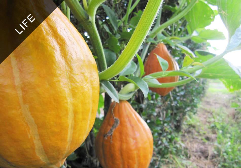 家庭菜園にも使える! 有機農家さんに聞いた野菜を育てる3つのコツ