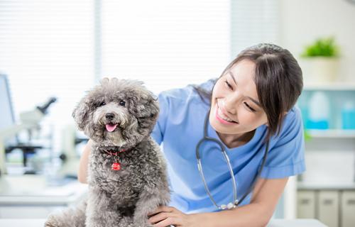 動物看護士