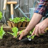 園芸、ガーデニング